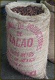 balenie kakaových bôbov