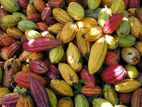kakaove struky