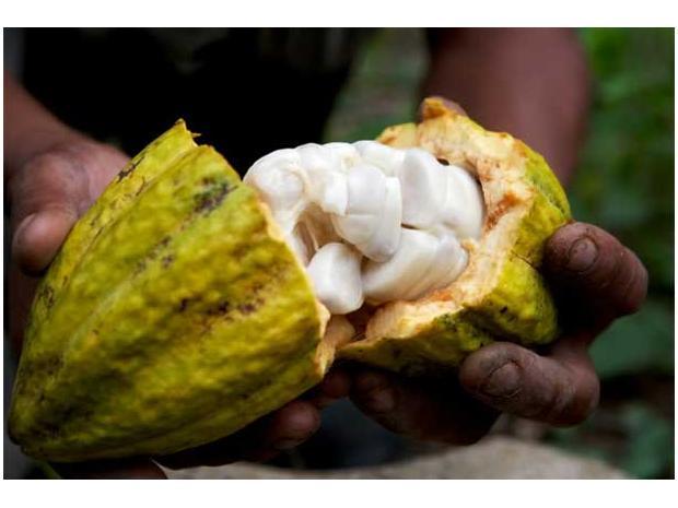 kakaové struky