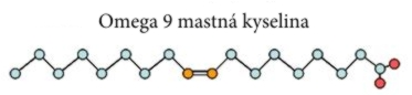 Omega 9 mastná kyselina